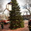 BRYAN EATON/Staff Photo. Amesbury firefighters string up the lights on the Christmas Tree in Market Square yesterday afternoon. The tree will be lit at the end of the Santa Parade tomorrow afternoon.