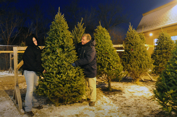 Salisbury: Cortney Eaton and Tim Lamprey take care of the Christmas trees at his Harbor Gardens Center in Salisbury, one of several purveyors in the area. Bryan Eaton/Staff Photo