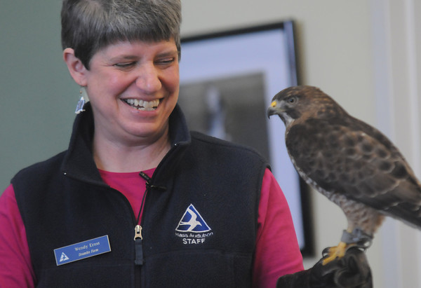 Newbury: Wendy Ernst of the Drumlin Farm shows off and talks about the Broad Tailed Hawk at the Joppa Flat Audubon Education Center as part of teh Eagle Festival Saturday. Jim Vaiknoras/staff photo