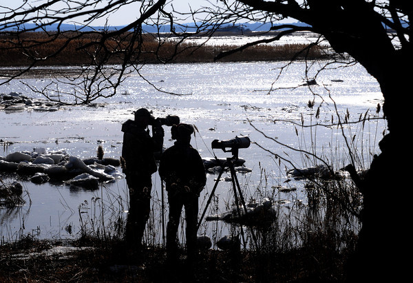 Salisbury: Photographers Duane Cross of Plymouth NH and Dale J. Martin of Lunenbury gets shots of a snowy white owl along Beach Road in Salisbury Saturday afternoon. Jim Vaiknoras/staff photo