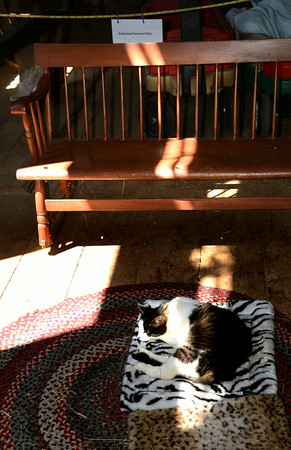 JIM VAIKNORAS/Staff photo Amos the cat lays in a sliver of sunlight as he guards the entrance to the barn at the Spencer-Peirce Little Farm in Newbury Sunday morning.