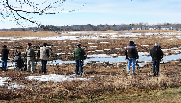 Salisbury: Birders focus their telescopes and cameras on a snowy owl in the marsh at Salisbury Beach State Reservation on Monday morning. There was a constant flow of spectators coming and going as word got around of the visitor from Canada. Bryan Eaton/Staff Photo