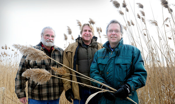 """Salisbury: Geoff Walker, Newbury Selectman, left, and Merrimack Valley Planning Commission's Peter Phippen, both founding members of the Great Marsh Revitalization Task Force with Film maker Richard Hydren, right, of Staddles Production, producer of phragmite documentary """"Danger in the Reeds"""" at a stand of phragmites on Ring's Island in Salisbury. Bryan Eaton/Staff Photo"""