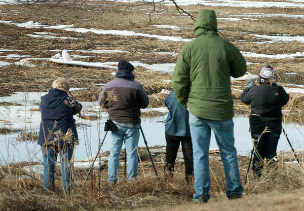 Salisbury: Birders focus their telescopes and cameras on a snowy owl sitting on ice, upper left, at Salisbury Beach State Reservation on Monday morning. There was a constant flow of spectators coming and going as word got around of the visitor from Canada. Bryan Eaton/Staff Photo