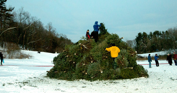 Londonderry: Scouts in Troop521 stack more than 300 Christmas trees for the 19th annual bonfire at Mack's Apples in Londonderry Saturday night.Jim Vaiknoras/staff photo