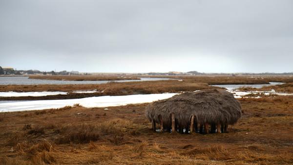 JIM VAIKNORAS/Staff photo Salt hay stack sits along the Plum Island Turnpike.