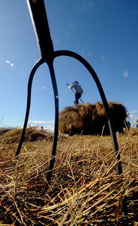 """Newbury: Jim Cunningham stacks hay during a Trails and Sails demonstration """"Making Hay in the Sunshine"""" along the Plum Island Turnpike Saturday. Jim Vaiknoras/Staff photo"""