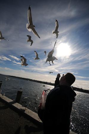 Salisbury: Rich Regan, of Hamilton, feeds a small flock of seagulls Monday afternoon at  the Salisbury Town Square. Jim Vaiknoras/Staff photo