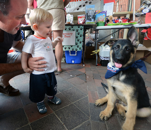 Newburyport: Emmitt Preston , 18 month, and his dad John, say hi to Jase, who belongs to Spence Shepard of Make No Bones Dog Training, on Inn Street during a Vests for Dogs fundraiser Sunday afternoon.JIm Vaiknoras/staff photo