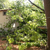 BRYAN EATON/Staff photo. Crews had yet to clear the downed trees at 4 Star Lane in Amesbury.
