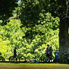 BRYAN EATON/Staff photo. Bicyclers take a rest under the huge oak tree at Maudslay State Park in Newburyport on Tuesday morning. Under the shade will be a popular spot the rest of the week at the weather gets hot and muggy.