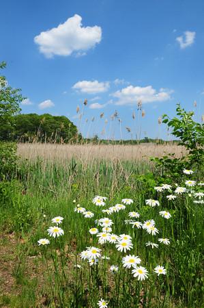 Salisbury: Wildflowers and expansive views of the marsh along Salisbury's Eastern Marsh Rail Trail. Bryan Eaton/Staff Photo
