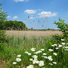 Salisbury: Wildflowers and expansive views of the marsh along Salisbury's Eastern Marsh Rail Trail. Bryan Eaton/Staff Photo