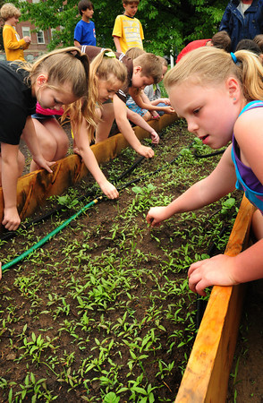 West Newbury: Students at the Page School in West Newbury weed the potato bed in their Colonial garden. Bryan Eaton/Staff Photo