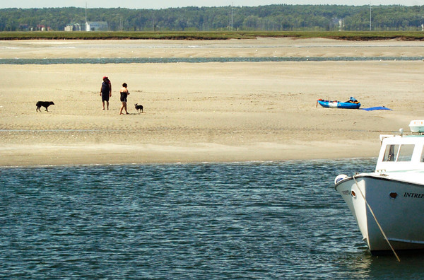 BRYAN EATON/ Staff Photo. Kayakers and their canine companions walked around on the clam flats in Seabrook Harbor at low tide on Monday afternoon. The rest of the week looks warm and sunny with some chance of showers Wednesday and Thursday.