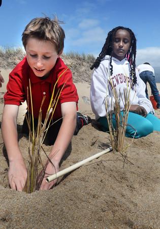BRYAN EATON/Staff Photo. Wesley Koglin, left, and Zari Lustgarten, both 10, and their classmates from Molin Upper Elementary School planted beach grass on Plum Island to help stem erosion.
