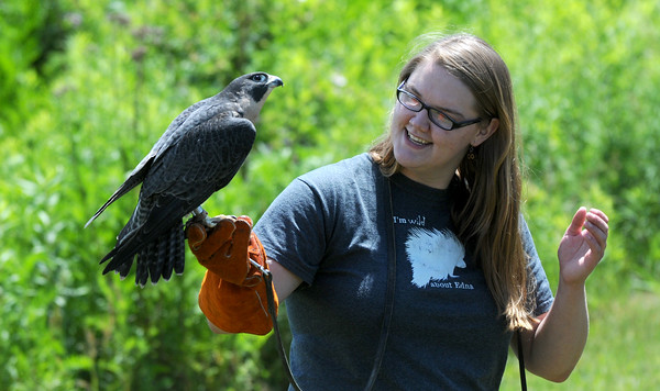 """JIM VAIKNORAS/Staff photo <br /> Emily Calhoun shows Freya, a Peregrine Falcon, at the Parker River National Wildlife Refuge Let's Go Outside program Saturday.<br /> The event provided children and adults with an opportunity to """"try out"""" or experience a range of fun, healthy outdoor activities including kayaking, surf fishing, archery target shooting, nature and wildlife photography, and bird watching."""