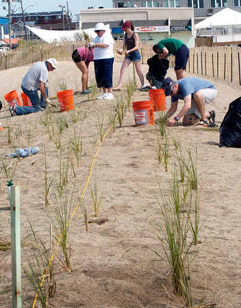 BRYAN EATON/Staff Photo. Volunteers helping out the University of New Hampshire and the Massachusetts DCR planted dune grass on Thursday morning. The were putting the grass at Salisbury Beach on the site of the old Sidewalk Cafe near where a boardwalk is to be built.