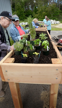 BRYAN EATON/Staff Photo. Triton High School special education students built two raised garden beds for the Salisbury Council on Aging at the Hilton Center. Yesterday they helped fill the beds with soil and the seniors started the planting.