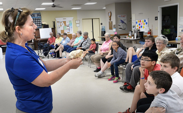 "BRYAN EATON/Staff Photo. Seacoast Science Center naturalist Nikki Annelli shows the skull of a harbor seal during a talk ""Save A Seal"" about what action to take if a seal is found lying on the beach. She was at the Senior Center in Salisbury in an intergenerational meeting with the Salisbury After School Kids Club where there were ice cream sundaes after the talk."