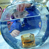 Amesbury: Nathan, no last name given, 3, of Amesbury, drops pennies into a fishbowl as he tries to win a prize at the Family Fun Fair at the Cashman School in Amesbury Saturday. Jim Vaiknoras/staff photo