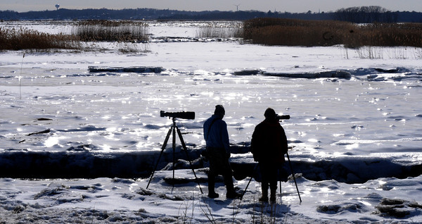 Salisbury: Two photographers talk as they photograph a snowy owl on a bright warm Friday afternoon off Beach Road in Salisbury. Jim Vaiknoras/staff photo