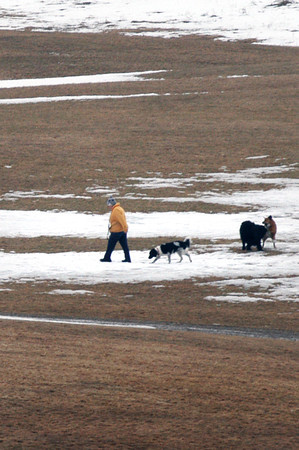 Amesbury: Dogwalkers have had a lot of snow to contend with as they meandered around Woodsom Farm in Amesbury this winter. The ground is now showing there and with temperatures in the 50's and rain in the forecast it won't be long before grass appears. Bryan Eaton/Staff Photo
