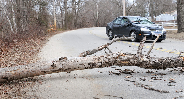 Salisbury: A dead treel fell across Ferry Road in Salisbury yesterday afternoon during the fairly strong winds. Bryan Eaton/Staff Photo