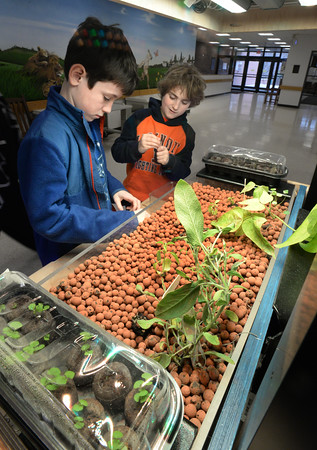 BRYAN EATON/Staff Photo. Kyle Flaherty, 9, left, and Calvin Buetow, 10, check the pH, ammonia and nitrate levels from the fish tank underneath the Grove Ecosystem at the Cashman School in Amesbury on Wednesday morning. The system provides algae to the fish below the plants, which in turn provide nutrients to fertilize the plants above teaching the students about the planet's ecosystem.
