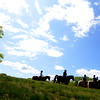 JIM VAIKNORAS/Staff photo A group of equestrians ride under blue skys at Maudslay in Newburyport Sunday morning.