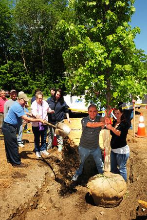 BRYAN EATON/ Staff Photo. Rita West, a member of the Davis family in Byfield, throws a shovel of dirt as a new maple tree was planted at the corner of Moody and Main Street in that town Friday. The tree is to honor World War II veterans and replaces another tree which is at that spot.
