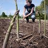 BRYAN EATON/Staff Photo. Brazilian exchange student Beatriz Barreira harvests asparagus, one of the first crops of the year, at Bartlett's Farm in Salisbury on Monday. Farmers and gardeners alike are hoping for rain as the area is several inches below average so far this year.