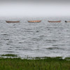 BRYAN EATON/Staff Photo. A boater motors with four dories in tow at Joppa Flats in Newburyport yesterday afternoon possibly something to do with the arrival of the tall ship El Galeon today.