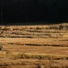 Newbury: The haystacks on Essex County Sportsmen property off Route One in Newbury at the Parker River catch the late afternoon sun. Bryan Eaton/Staff Photo