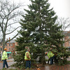 Newburyport: Workers secure the Christmas tree that was brought to Newburyport's Market Square on Friday morning. Bryan Eaton/Staff Photo