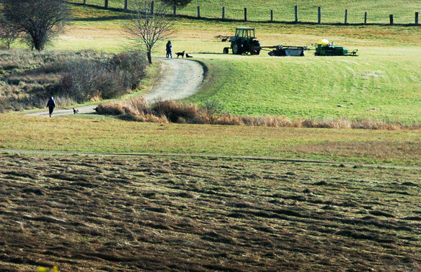 Amesbury: The last hay of the year is spread at Woodsom Farm in view of people who braved yesterday's wind and cold to walk their canines at the popular spot. A warmup is on the way for the weekend with plenty of sun in the forecast. Bryan Eaton/Staff Photo
