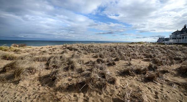 Jim Vaiknoras/Staff photo Grass on Plum Island affected by nematodes .