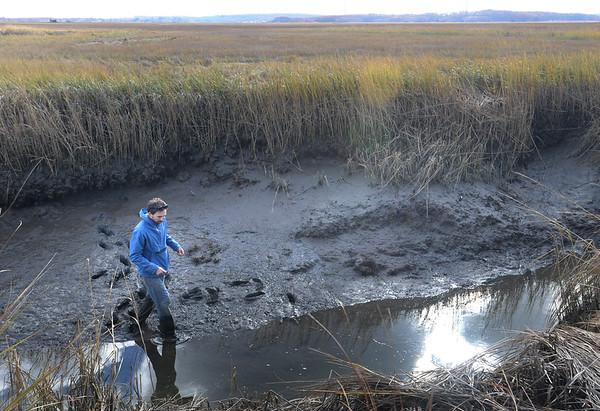BRYAN EATON/ Staff Photo. Biologist David Samuel Johnson checks for fiddler crabs in Club Head Creek in Rowley.