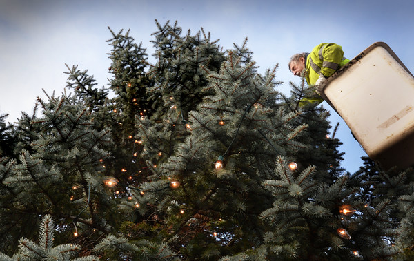 BRYAN EATON/Staff photo. Ray Cote of the Salisbury DPW strings lights on the Christmas tree at the town common on Monday afternoon. The tree will be lit this coming Sunday at 6:00p.m. with a tour of the nearby Salisbury Historical Society building previous to the event.