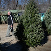 BRYAN EATON/Staff photo. Freeman Condon has loads of Christmas trees at his Beach Plum Farm in Salisbury.