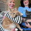 Salisbury: Dorothy Fairweather, left, one of the founders of the Merrimack River Feline Rescue Society and staffer Liz Pease hold Toboggan, and Frye respectively. Both cats have feline leukemia and the is one of the only one that will take cats with that disease. Bryan Eaton/Staff Photo