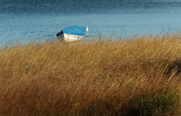 Newburyport: A covered dory floats along the grasses at Joppa Flats in the late afternoon sun on Thursday afternoon. Bryan Eaton/Staff Photo