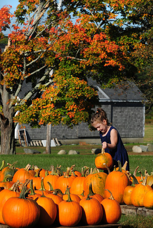 Salisbury: Sydney Pearl, 5, of Newburyport checks out the pumpkins at Bartlett's Farm in Salisbury on Wednesday morning. The fall scene didn't portray the unseasonably warm weather that was present. Bryan Eaton/Staff Photo