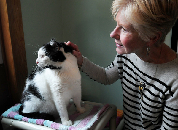 Salisbury: Merrimack River Feline Rescue Society founding member Dorothy Fairweather pets Moccasin which has feline leukemia. The society's 19th Annual Fur Ball Auction fundraiser is this weekend. Bryan Eaton/Staff Photo