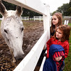 BRYAN EATON/Staff photo. Ava Noe, 9, top with siblings Isabelle, 6, and Vincent, 3, of Wakefield meet Tris at NEER North (New England Equine Rescue) at their location in West Newbury. They were at the organization's annual Fall Family Celebration with their great aunt Rosemarie Thistle, who is a supporter, and great uncle Denis O'Connell.