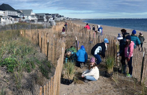 BRYAN EATON/Staff photo. River Valley Charter School sixth-graders plant beach grass between snow fencing at Salisbury Beach assisting Alynson Eberhardt and her team from the University of New Hampshire. Part of the Newburyport school's mission is to learn about history, culture and ecology of the Merrimack River Valley.