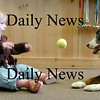 Newburyport: <br /> Teagan Price plays ball with the family dog, Crystal.<br /> Photo by Bryan Eaton/Newburyport Daily News. Friday, September 15, 2006