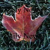 Newburyport: <br /> Cold temperatures this weekend  cover a leaf in frost along Scotland road Saturday morning.<br /> Photo by Jim Vaiknoras/Newburyport Daily News. Sunday, October 15, 2006