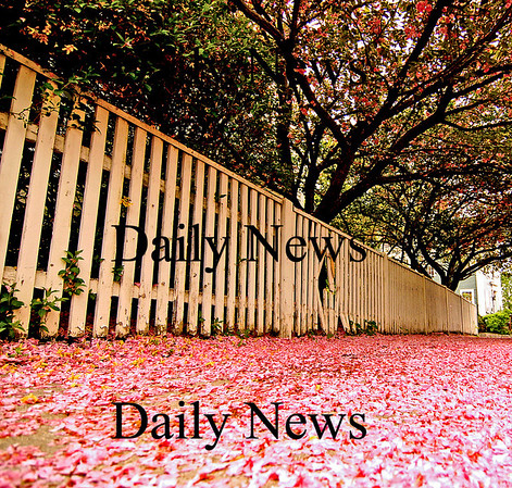 Newburyport:<br /> Pink petals cover the sidewalk in front of this house on Fruit Street in downtown Newburyport.<br /> Photo by Ben Laing/Newburyport Daily News Thursday, May 17, 2007