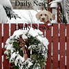 "Newburyport:<br /> Hank, a ""labradoodle"" who lives on Purchase Street, keeps a watchful eye out as his neighbors are busy shoveling their driveways and sidewalks.<br /> Photo by Ben Laing/Newburyport Daily News Monday, January 14, 2008"